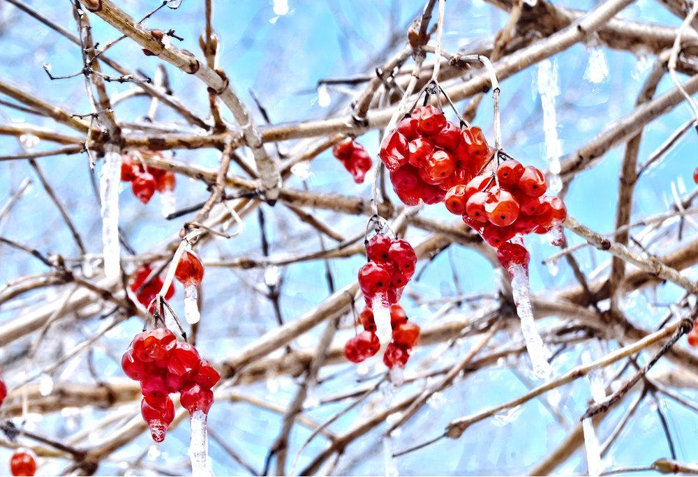 sidneyfletcher_FrozenBerries.jpg
