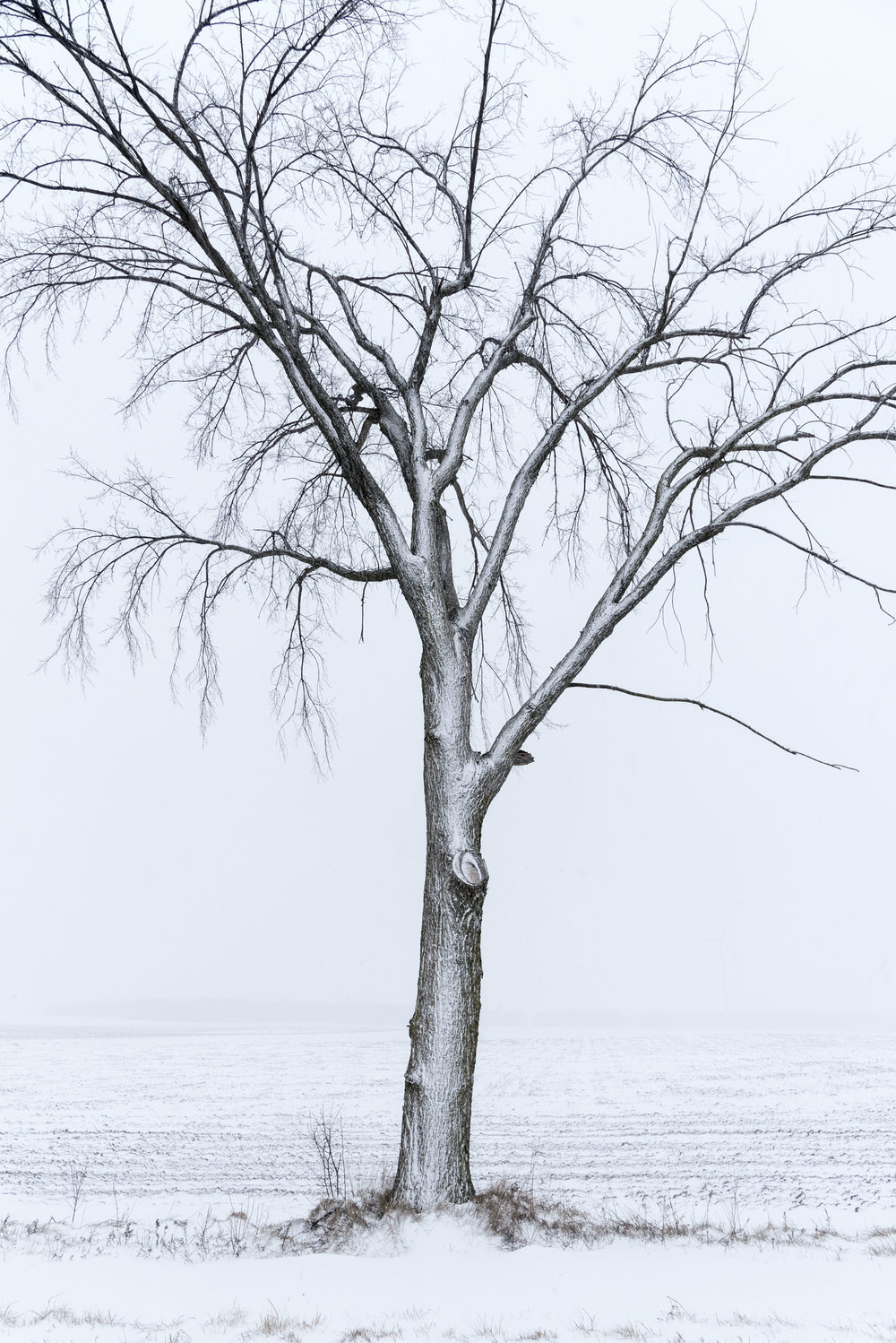 A tree in snow.jpg
