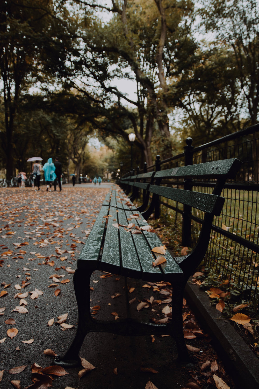 Rain drops in Central Park.jpg