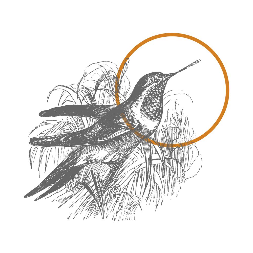 fragile bird logo 1.png