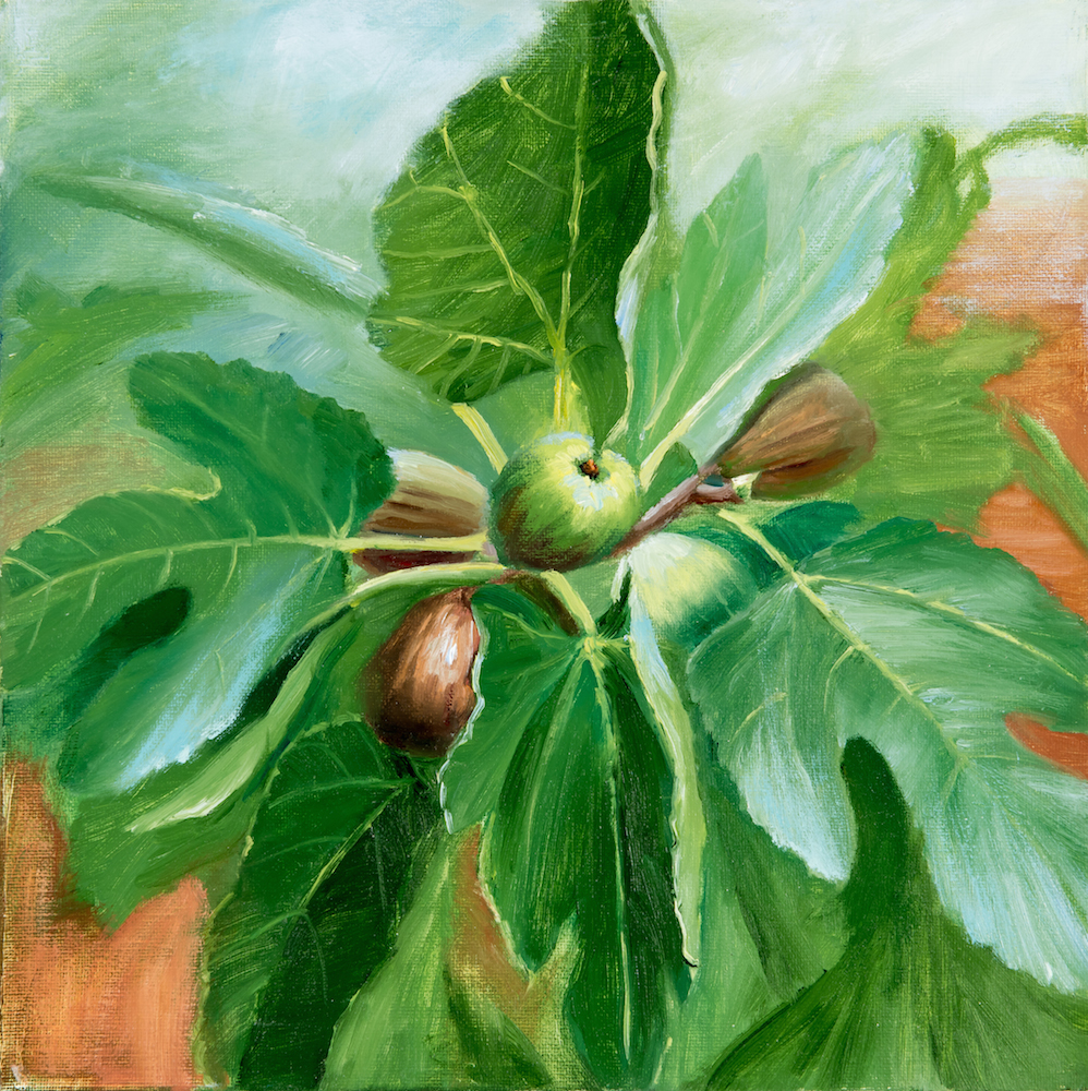1. J.Dalrymple Non Native Vignette_ Ficus carica (fig tree)18x18 oil on canvas.jpg