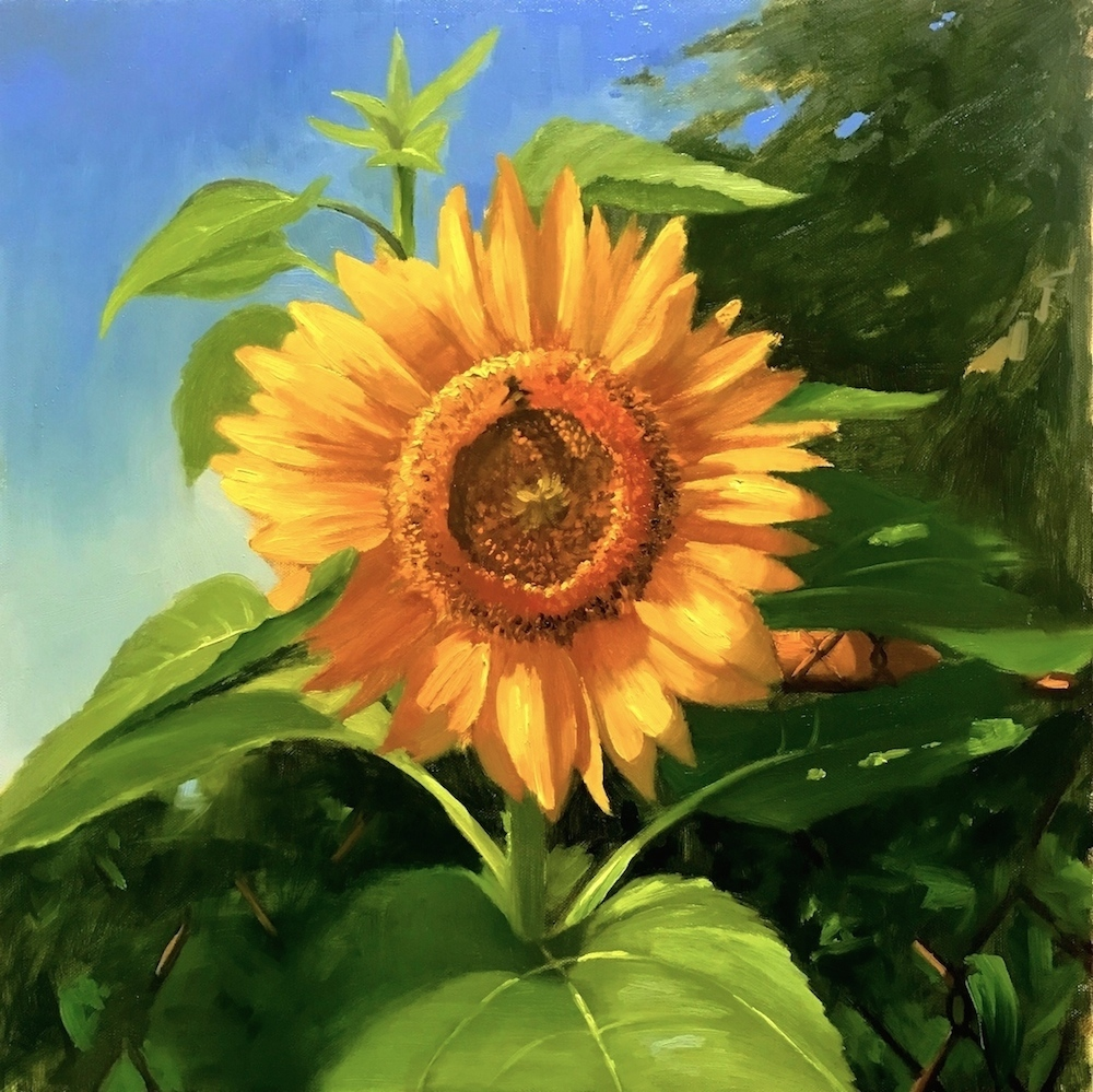4.J.Dalrymple Helianthus annuus (sunflower) 18_x18_ oil on canvas.jpg