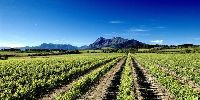 South-africa-wine-climate