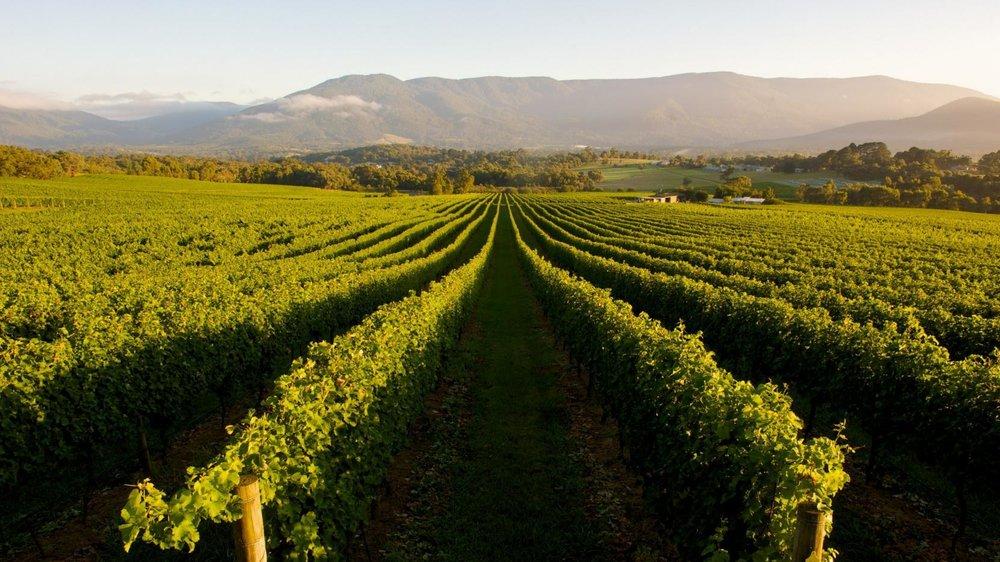 Australian-wine