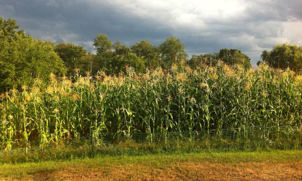 2016 Corn field header.JPG
