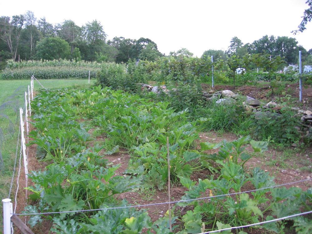 2008 Field.jpg