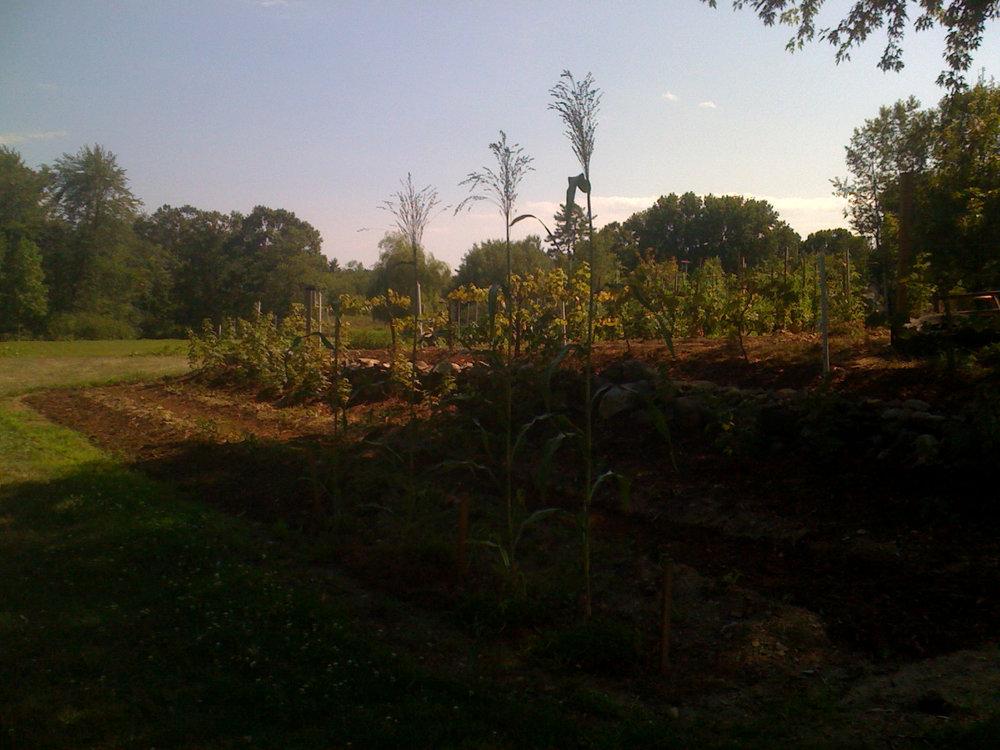2010 Field.JPG
