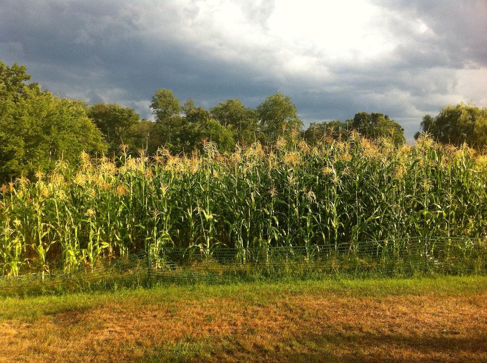 2016 Corn field storm.JPG