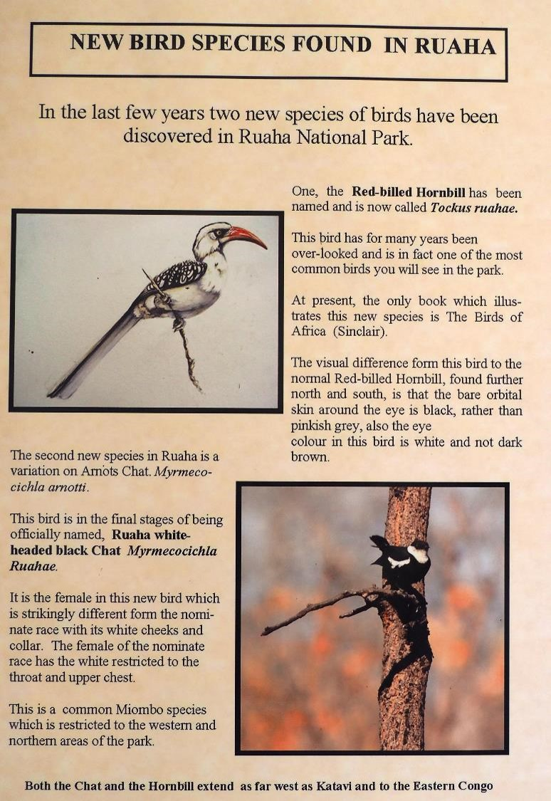new bird Ruaha.jpg
