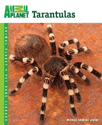 my primer on tarantula keeping - click here to order book or Kindle e-book from Amazon