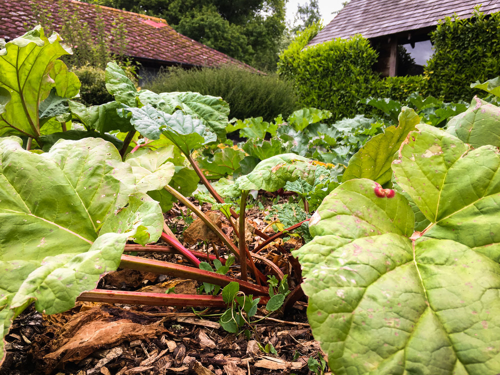 The Ethicurean Rhubarb