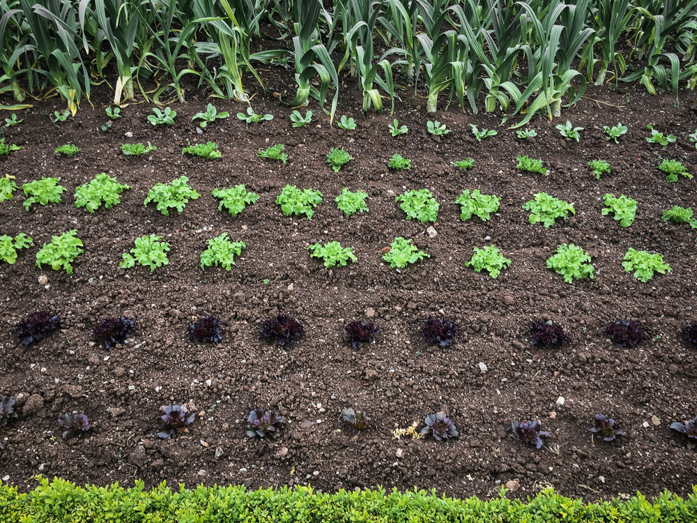 The Ethicurean Vegetable Patch