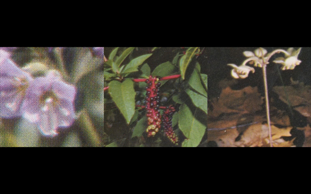 Flowers-04.jpg