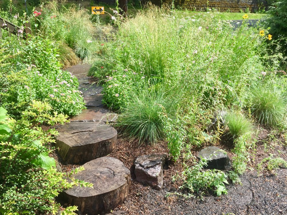 Native Habitat Garden - Transformation of an entire urban lot to a Backyard Habitat.