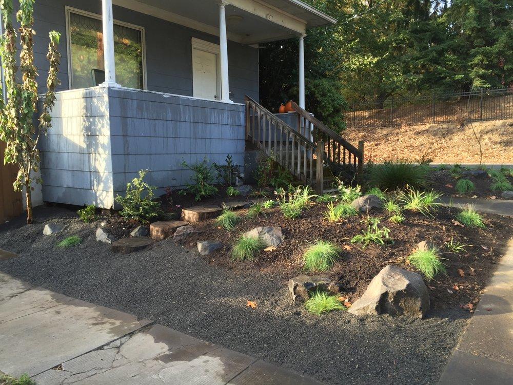 Front yard: Planting