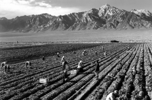 Ansel Adams  documented farmworkers at Japanese internment camps in California .