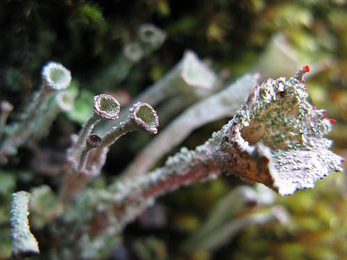 extraterrestrial-lichen.jpg
