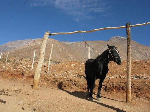 horse-in-desert