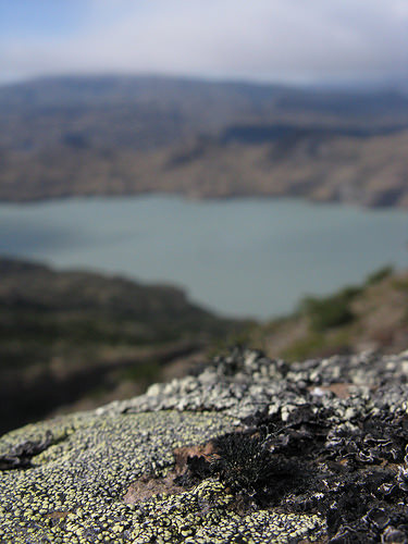 lotsa-lichen.jpg