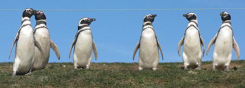 penguin-mafia.jpg