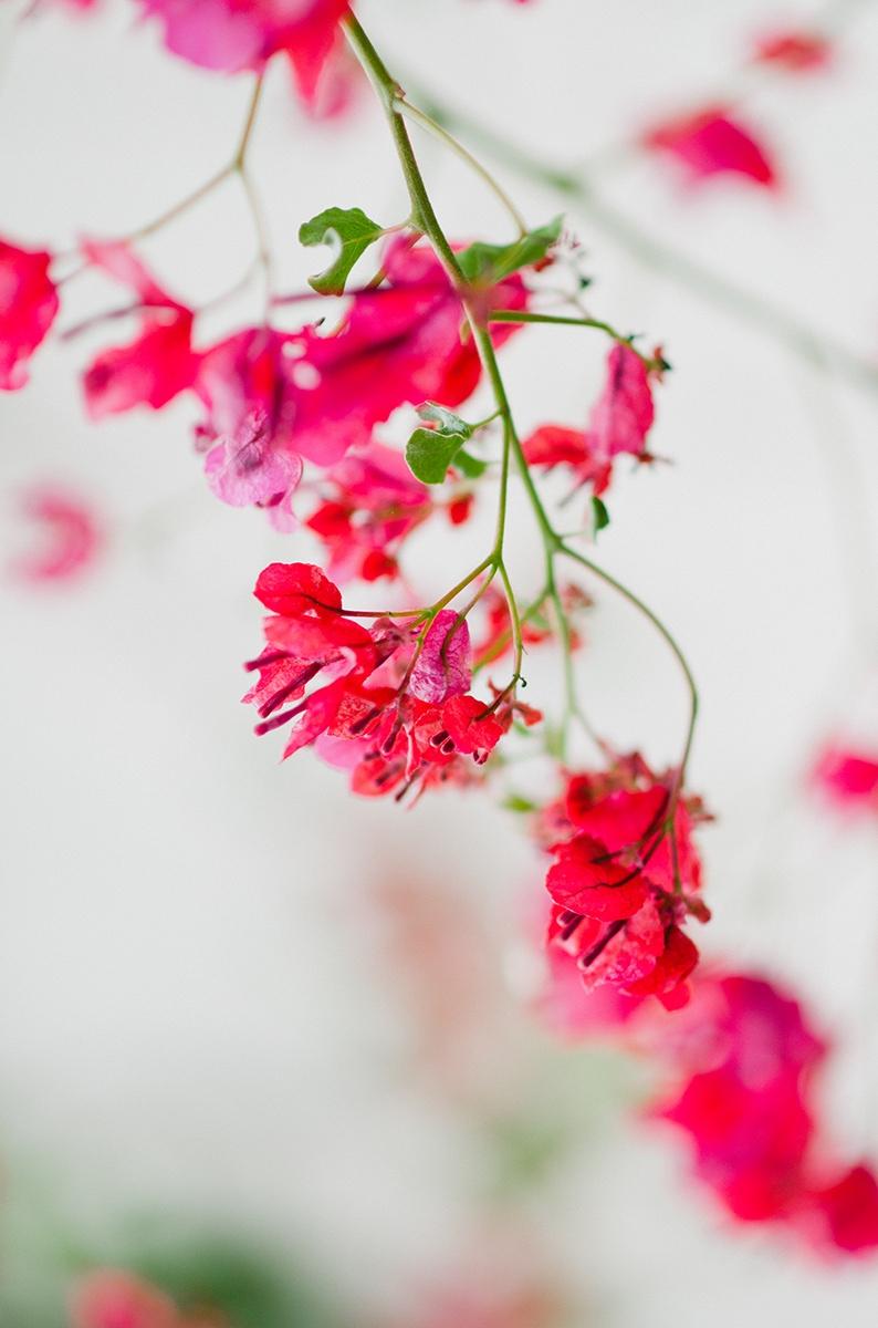 NURAnisaNoor_Flowers-26.jpg