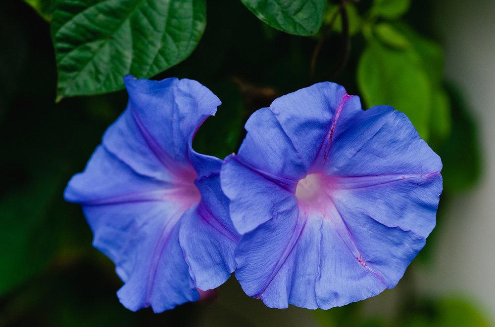 NURAnisaNoor_Flowers-6.jpg