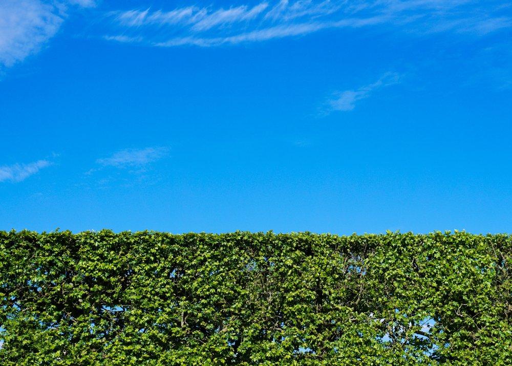 Paris hedges.jpg