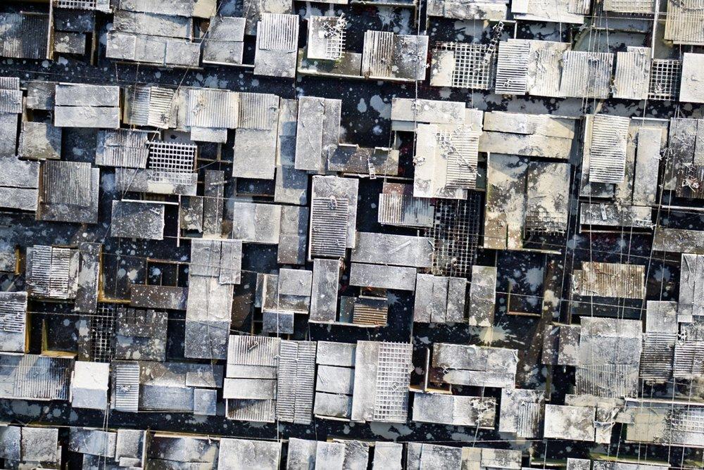 White rooftops.jpg