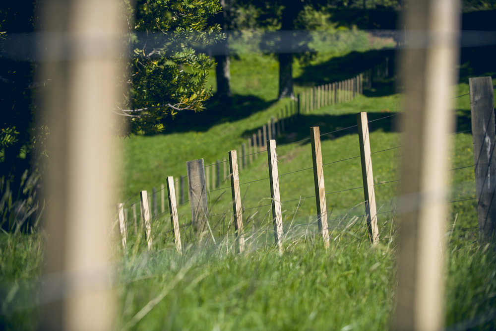 new zealand farm fenceline.jpg