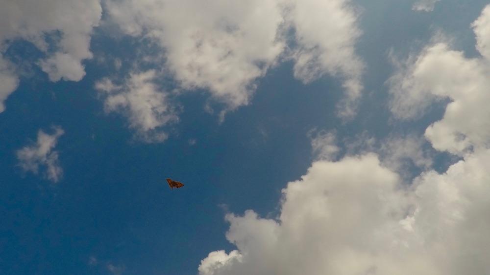 5.Butterfly.jpg