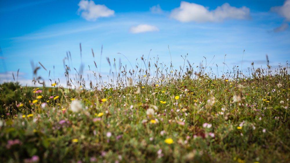 3.Meadow.jpg