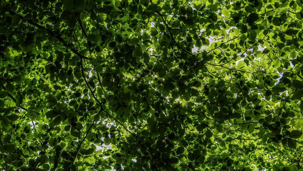5.Canopy.jpg