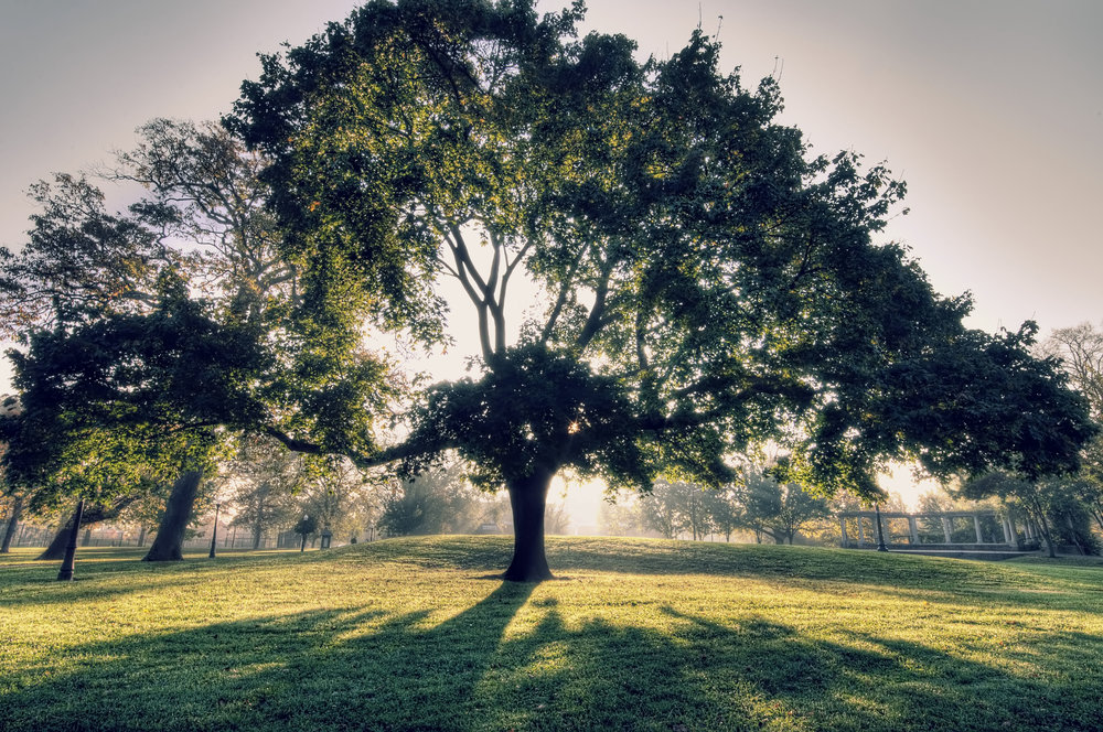 tree shade.jpg