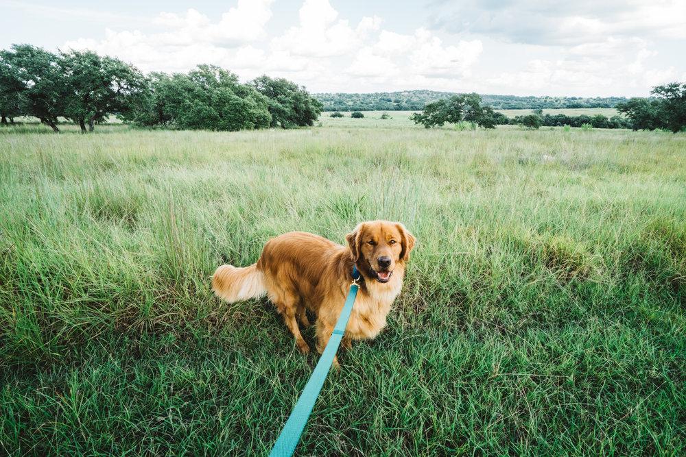 dogplusbone-1.jpg