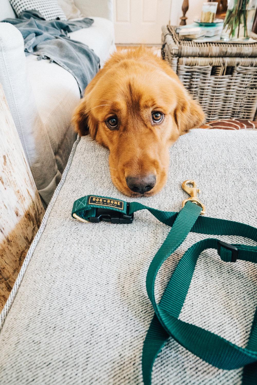 dogplusbone-4.jpg