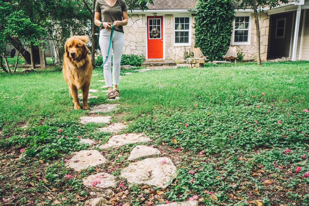 dogplusbone-5.jpg