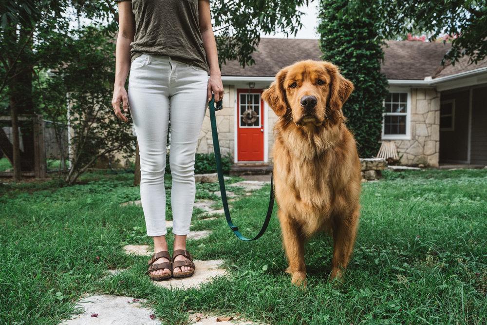 dogplusbone-7.jpg