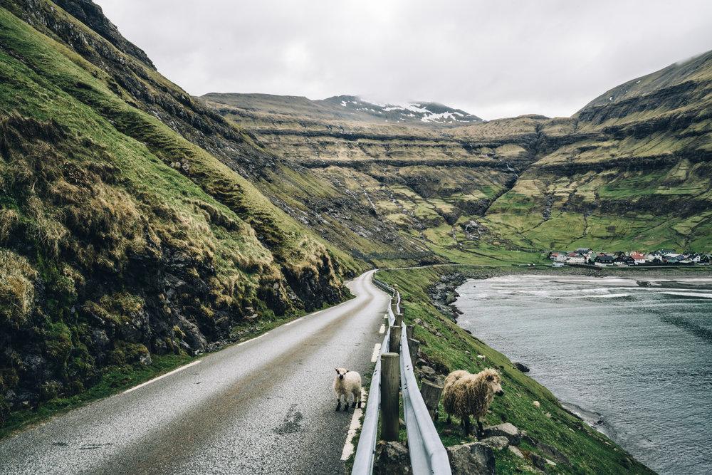 faroeislands-hunter-web13.jpg