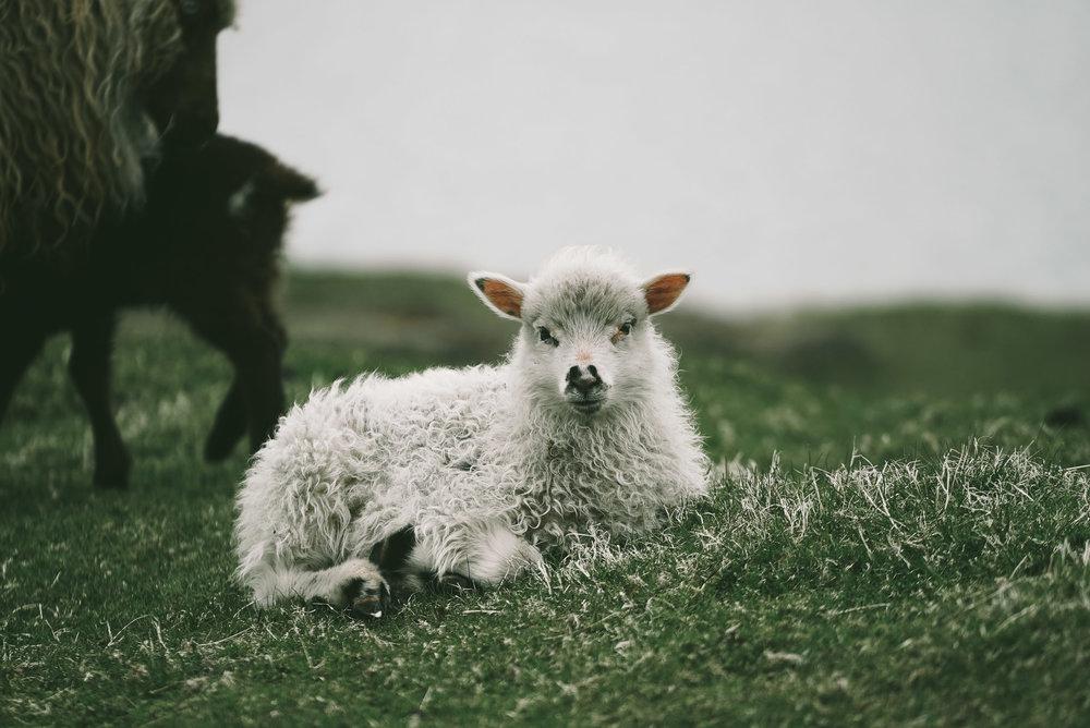 FaroeIslands (49 of 49).jpg