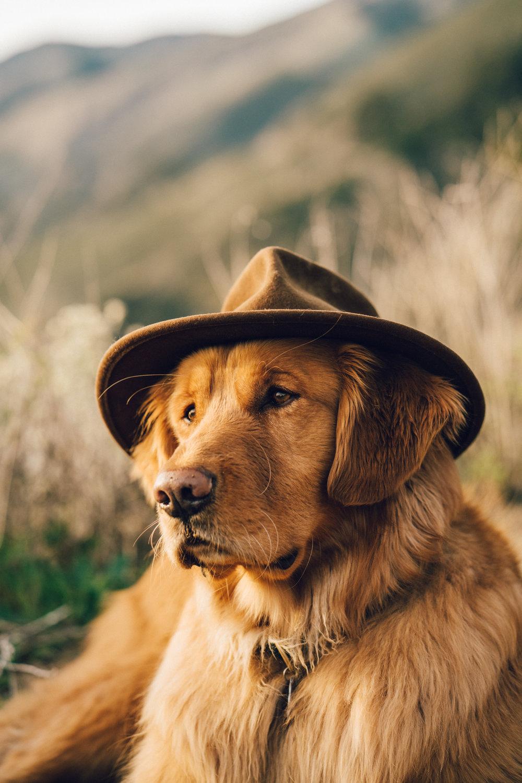 big sur travel guide aspen the mountain pup