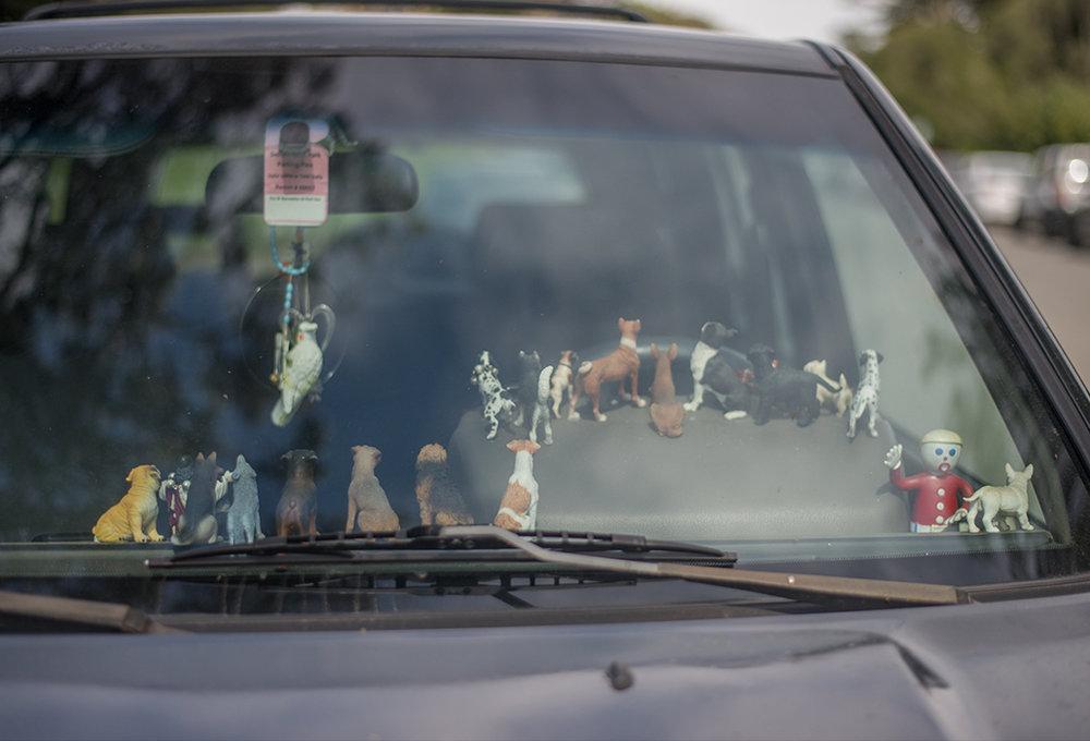 cães ao volante.jpg