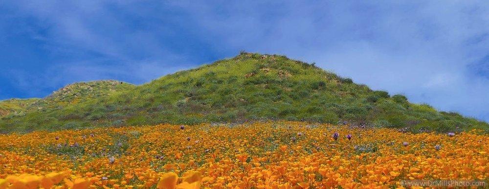 Landscape/Stock Photo: Poppy Fields adjacent to Lake Elsinore, Southern California © 2017 Dr. Steven Mills, DC, www.DrMillsPhoto.com