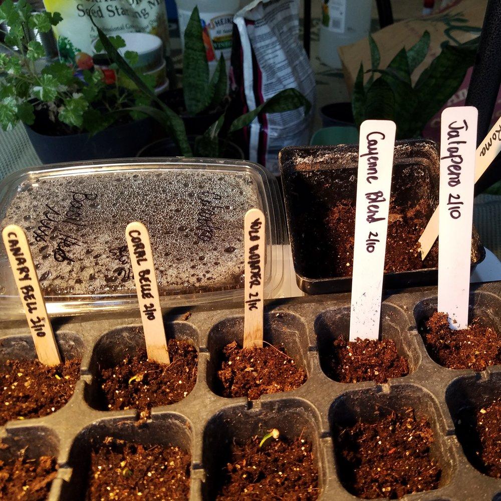 bab-seed-starting.jpg