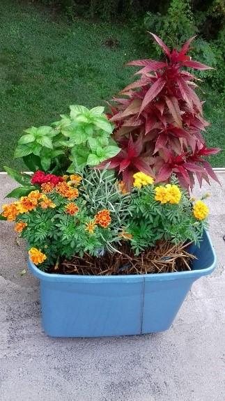 galandab-straw-bale-gardening-1.jpg