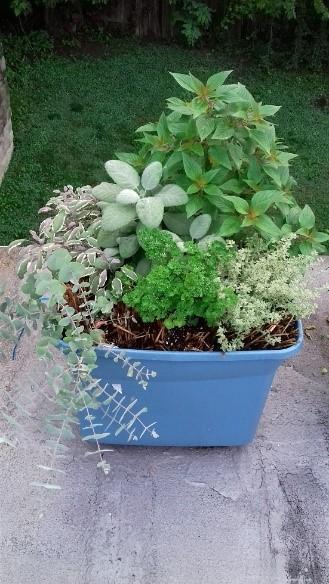 galandab-straw-bale-gardening-3.jpg