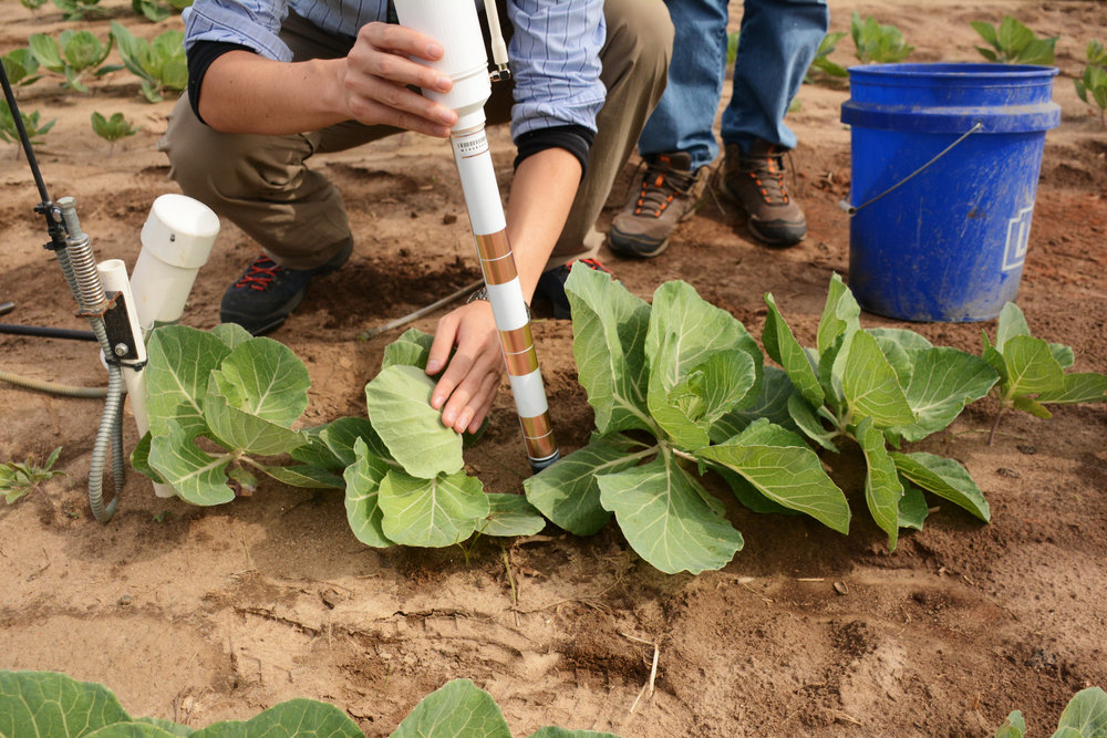 Researchers install a networked soil moisture sensor at the University of Georgia's Stripling Irrigation Research Park in Camilla, Georgia. They're trying to use big data systems to conserve water.