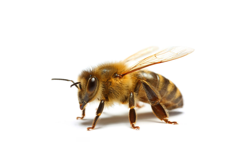 honeylogo1.png