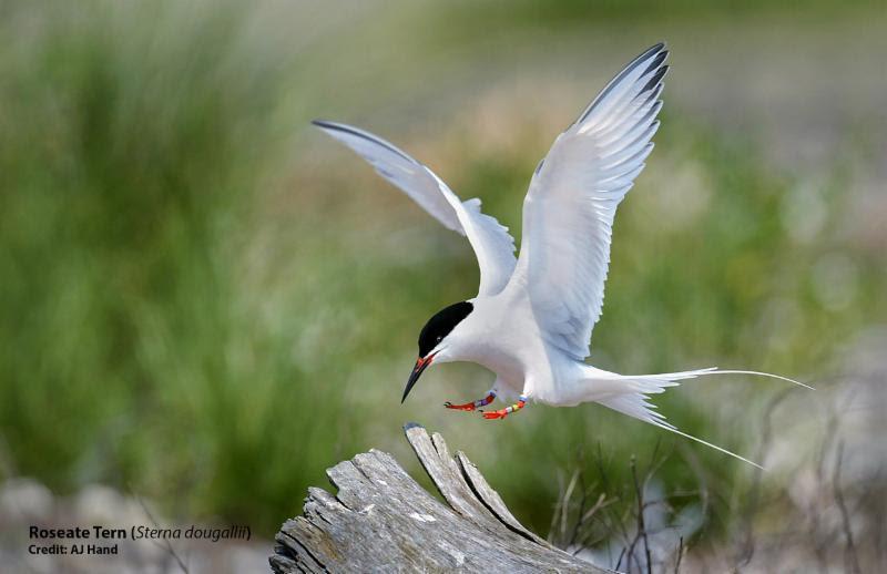 Flora - tern.jpg