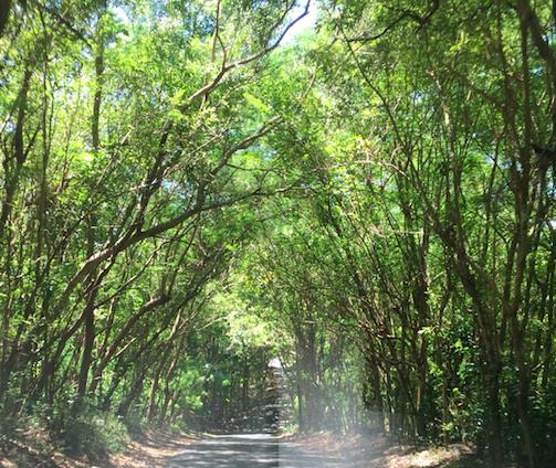 18 sept kol nidre trees.png