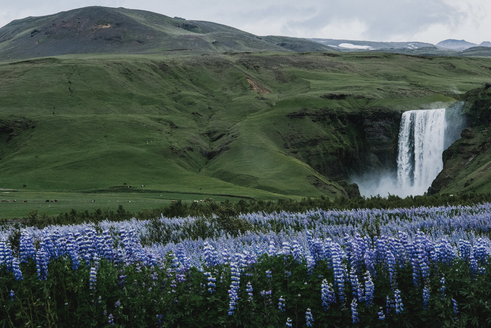 BexarGoods_Iceland_5501.jpg